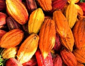 kakao - perperzona